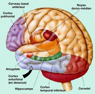 mémoire musculaire